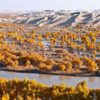China-Xinjiang-Tarim-River
