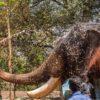 India-elephant-bath