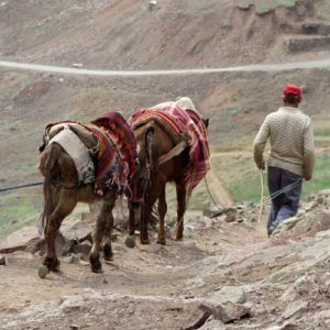 Man in the hills leading two donkeys