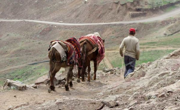 Man in the hills leading two donkeys. - small group tours to Iran