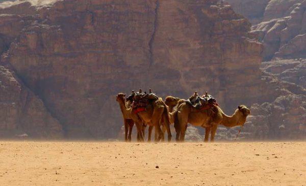 Jordan-camels-wadi-rum