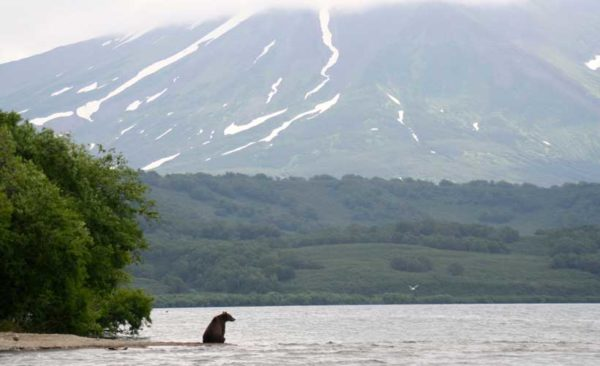 Kamchatka-Bear-sitting-Kurilskoye-Lake