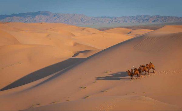 Mongolia-gobi-desert-camels
