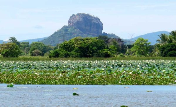 Sigiriya Rock Fortress from a distance with water lilies in forefront