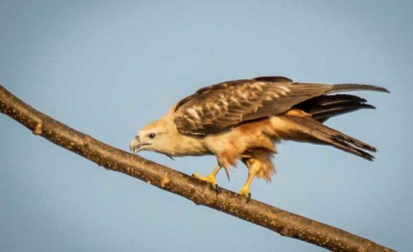 india-bird-life