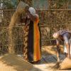 india-ladies-working-grain