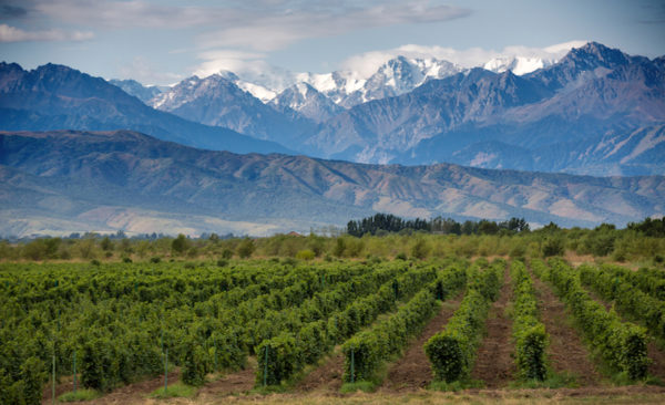 Argentina-Mendoza-winelands
