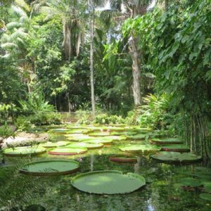 Brazil tours with Tropical garden with large lily pads