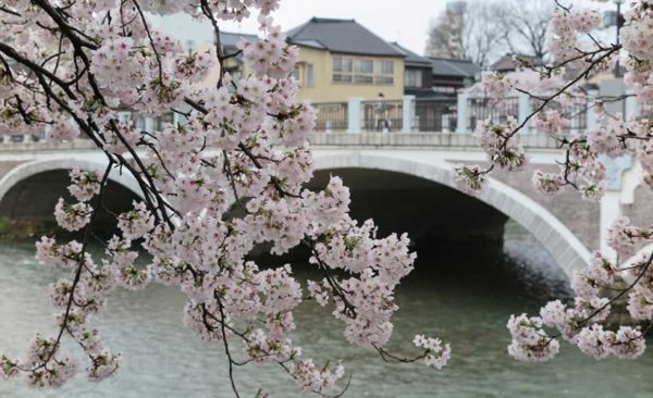 Japan-blossom-bridge