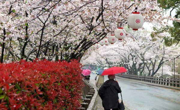 Japan-blossom-lanterns
