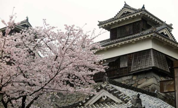 Japan-blossom-temple