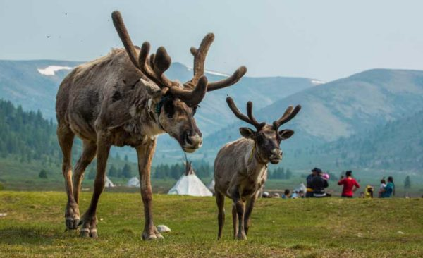 Mongolia-Reindeer-Hovsgol-lake