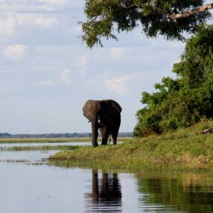 Bull elephant on Southern Africa tours