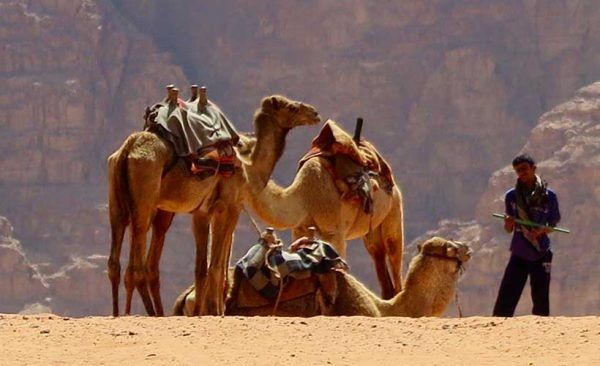 Camel rides in Jordan