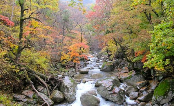 South-Korea-autumn-leaves