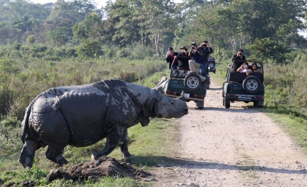 India-safari-rhino