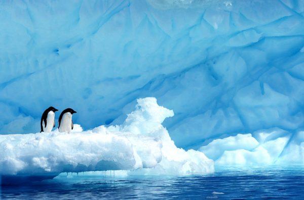 Antarctica Adelie Penguins