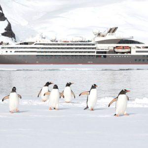 Gentoo Penguins and Ponant ship