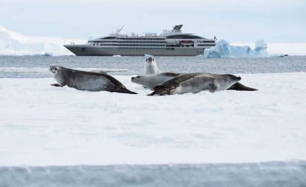 Antarctica ship and sea lions