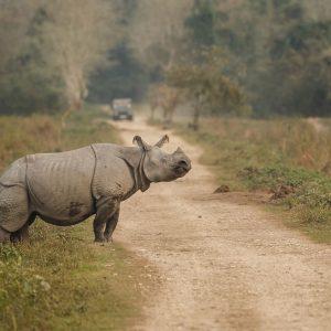 Rhino sighting at Kazaringa NP