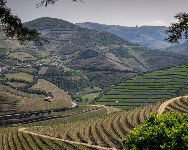 Doura-Valley-wine-growing-region-Portugal