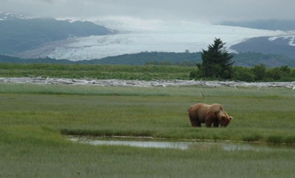 Alaskan-wilderness-with-bear