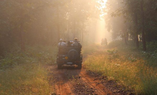 Pench-National-Park-at-dawn
