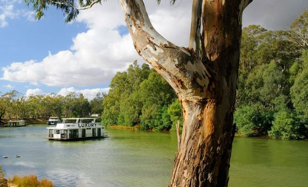 River boat on the Murray