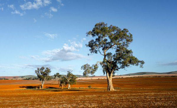 A beautiful field in South Australia