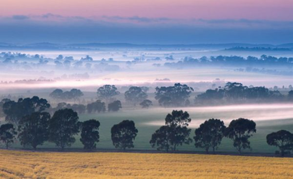 Sunrise in the Clare Valley