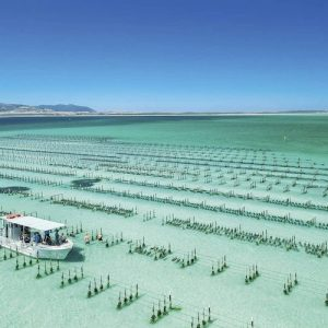 Coffin Bay oyster farming in South Australia