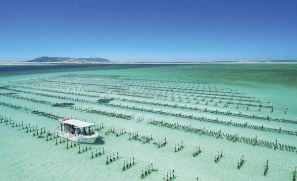 Coffin Bay oyster farming in South Australia